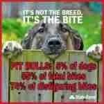 Dog Bite Prevention Week 2017 starts with a bang-bang-bang