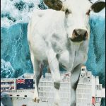 New Zealand ends live sheep & cattle exports by sea––two years from now