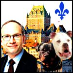 Quebec introduces toughest dangerous dog law in North America