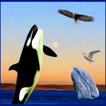 Hidden Beach:  why grey whales feast while orcas starve