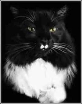 Black and white cat named Charlie