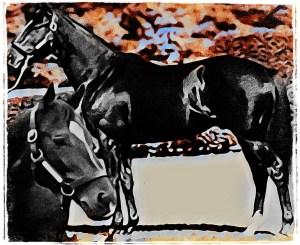 Sunday Silence horse