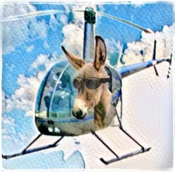 Donkey flying helicopter
