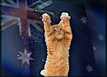 Australian cat