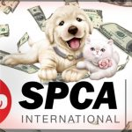 Montreal SPCA sues SPCA International to try to get back web name