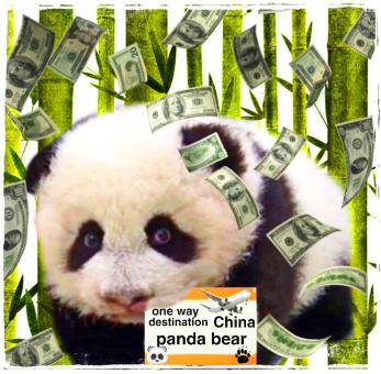 Panda with money