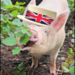 """U.K. """"animal sentience"""" law: """"victory"""" claimed before the fight begins"""