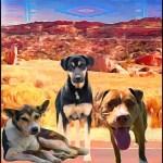 Rez dogs at Fort Defiance.