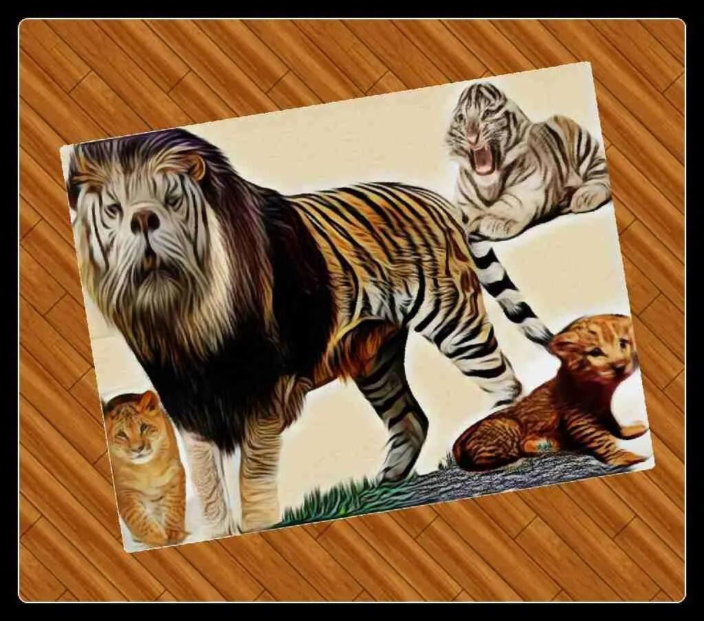 """Ban white tigers & lion/tiger hybrids,"" sanctuarians beg ... - photo#4"