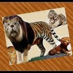 """Ban white tigers & lion/tiger hybrids,"" sanctuarians beg feds"