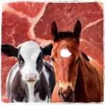 Cow & horse