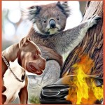 "Koalas, ""world's cutest critters,"" under fire:  logging, disease, cars & pit bulls"
