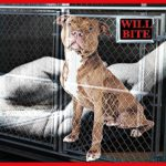 Virginia bars shelters & rescues from hiding dogs' bite history