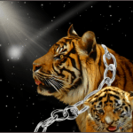 Tiger with cub look up at shooting star