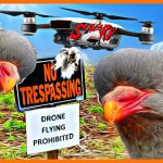Biggest pigeon shoots in years follow Pennsylvania cruelty law exemption