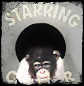 Chatter the chimp