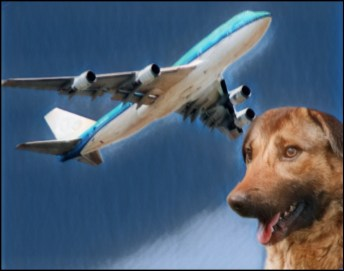 Airplane and overseas Rescue dog