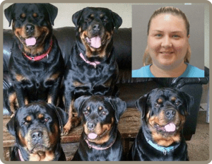 Why Rottweilers Are As Deadly As Pit Bulls Animals 24 7