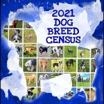 Dog breed census 2021:  Labs, hounds top list;  pit bulls come in third