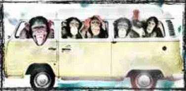 chimpanzees in a van