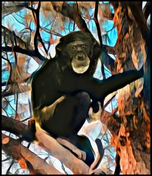Buck Brogoitti the chimpanzee that attacked