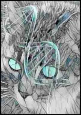 DNA kitty cat