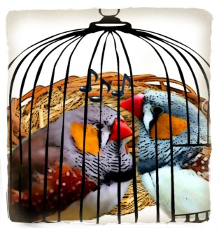 Caged finches