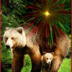 No more fireworks over grizzlies in Banff National Park