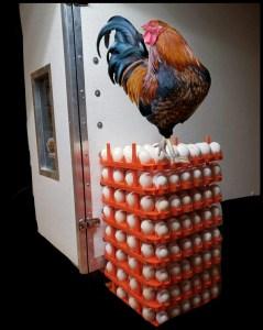 Gamecock incubator.