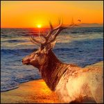 Dying tule elk need water now diverted to cattle; can lawyers save them?