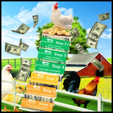 Global Animal Protection (GAP) steps with Farm scene, chickens and a rooster