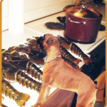 Tail-docking dogs & boiling crustaceans