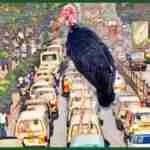 """Undertaker birds"" replace street dogs in African cities"