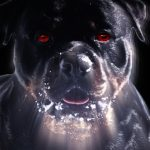 The Rottweilers in my life:  that could have been me