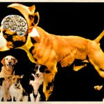 Dog brain study refutes every major claim of pit bull advocacy