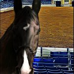 Walking Horse National Celebration:  don't bet on the numbers