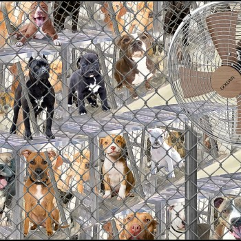 Pit bull dogs in kennels at shelter