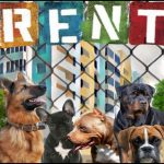 Courts reject suing landlords for attacks by dogs kept by indigent tenants