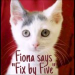 Feline Fix by Five:  the F-word campaign