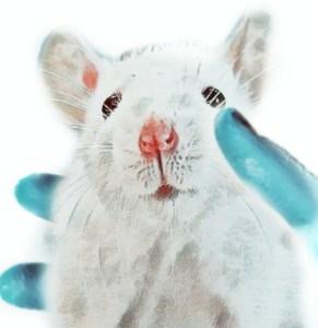 White lab rat
