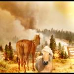 1,000 wild horses expelled from the Devil's Garden