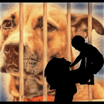 Moms of babies killed by pit bulls want foster agencies to pay