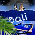 Bali:  fighting rabies & dolphin captivity amid mud & ashes of a live volcano