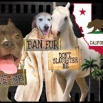 Fur sales, wildlife acts, & hiding dog bite history banned in California