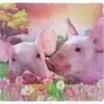 USDA Slaughterhouse Deregulation: Pigs in Peril