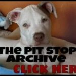 Obsessed about pit bulls?