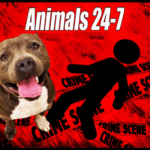 Helpful links for Pit Bull Victim Awareness Day