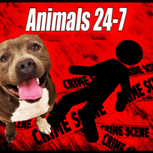 43 Americans & Canadians killed by dogs in 2018, 34 by pit