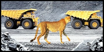 Iranian cheetah defenders face the death penalty – Animals 24-7
