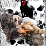 The Third Dog:  a mystery featuring 2 deaths, 2 Great Danes, 2 pit bulls,  and ???